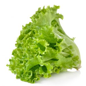 Soft Leaf Lettuce